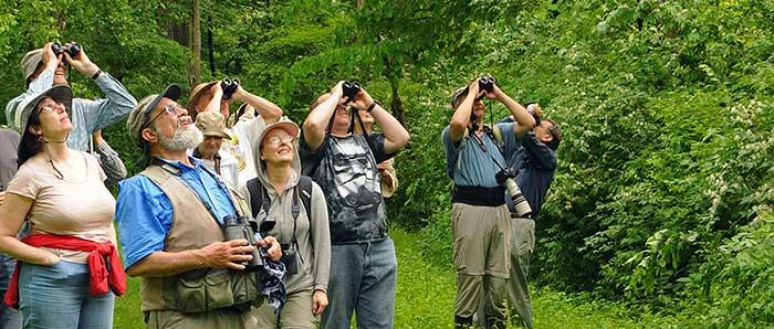 Field Trip Institute Woods