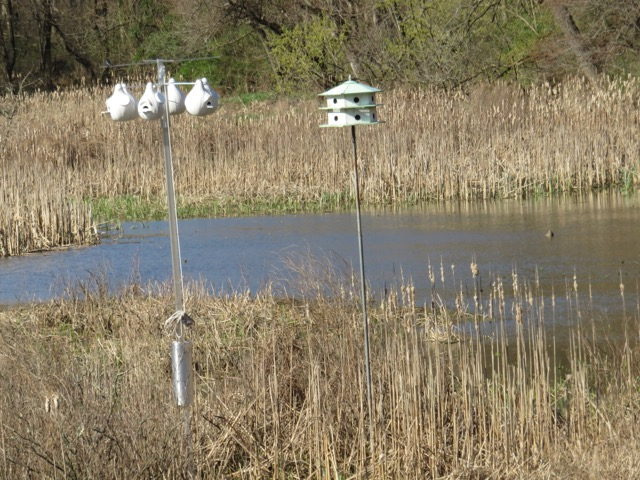 Purple Martin Houses Rogers Refuge, Princeton